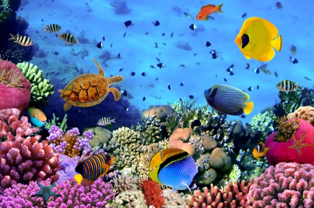 ♥Underwater♥ - underwater, reef, fishes, ocean, coral, tropical, sea