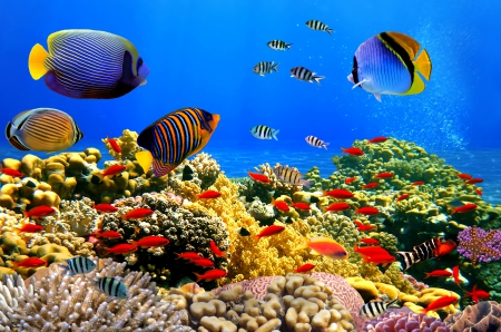 ♥Underwater♥ - fishes, underwater, ocean, tropical, reef, coral