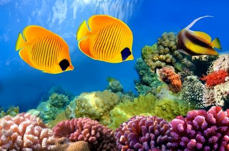 ♥Underwater♥ - fishes, tropical, ocean, underwater, reef, coral