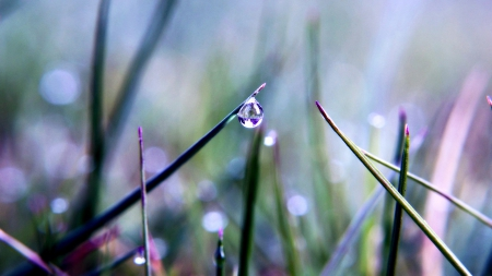 drop - grass, spring, drop, nature