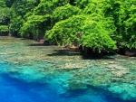 Kimbe Island, Papua New Guinea