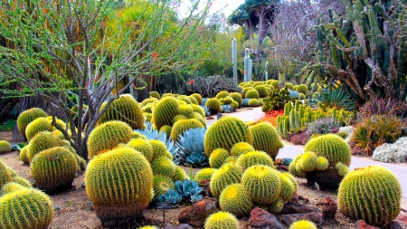 wonderful cactus garden - path, garden, trees, cacti