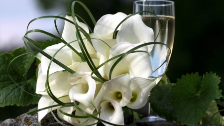 ❀  white tulips❀ - withe, moment, tulips, wine