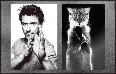 M & C - man, funny, cat, Robert Downey Jr, actor, by carmencitazapacita