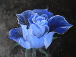 Blue Rose in Canvas