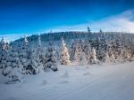 Frigid Winter Landscape