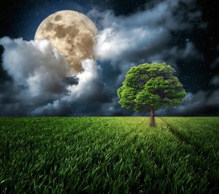 ♥Moonlight♥ - tree, moon, grass, full, clouds, sky, field, night