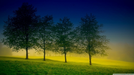 Four trees - foggy, HD, spring, fog, mist, tree, wallpaper, nature, field, scene, landscape