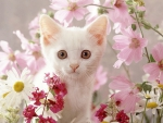 white kitty among pink flowers