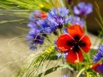 Stalk of apring flowers