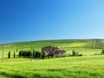 a tuscan farm on a bright summer day