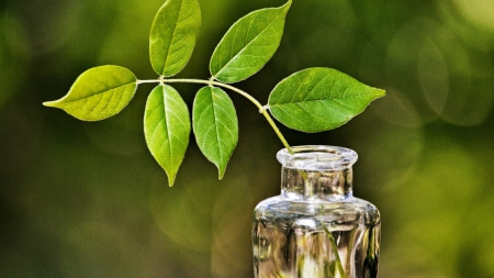 green leaves in a bottle - on, botle, leaves, green, the