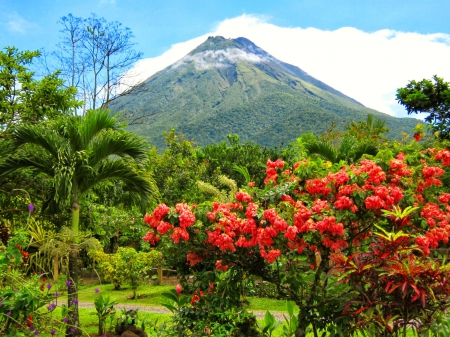 Costa Rica volcano - exotic, beautiful, park, trees, sky, volcano, Costa Rica, mountain, national park, flowers, garden, nature