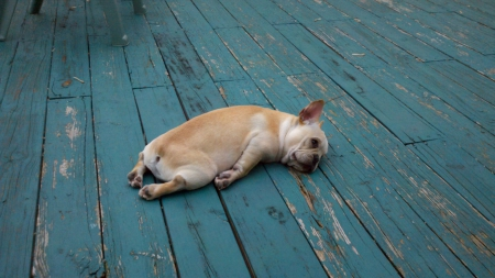 It's been a haaard day.... - little, floor, tired, puppy dog, hard, day, funny, dog, night, laying