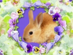 Bunny and Pansies