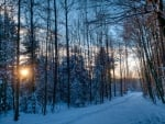 a forest in winter at sunrise