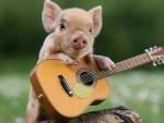 Funny piglet