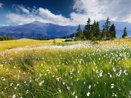 Spring Fields - Field, Spring, Flowers, Nature