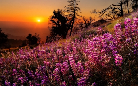 Sunset slope - amazing, glow, lovely, orange, fiery, beauitful, sunset, trees, sky, valley, mountain, wildflowers, field, meadow