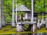 Interesting Swamp House