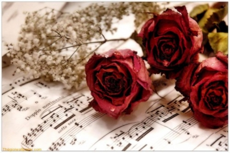 Roses - red roses, notes, music, tribute, roses