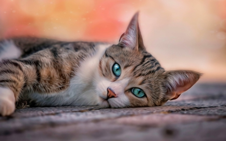 Beautiful Cat 3d And Cg Abstract Background Wallpapers