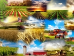 Farmers Collage