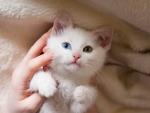 Cute Kitten ♥