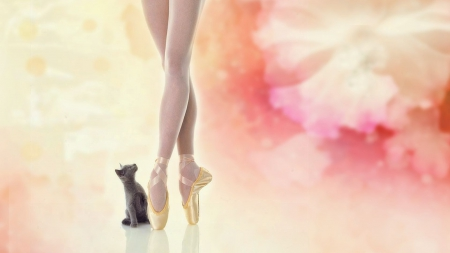 Chaton et Ballerine - ballerina, Entropy, flower, cat, kitten