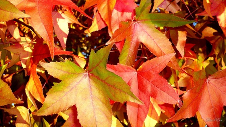 The Beginning - fall, washington, leaves, foliage, autumn, widescreen