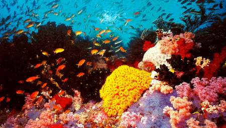 Great Barrier Reef Corals Coral Reefs Nature Background