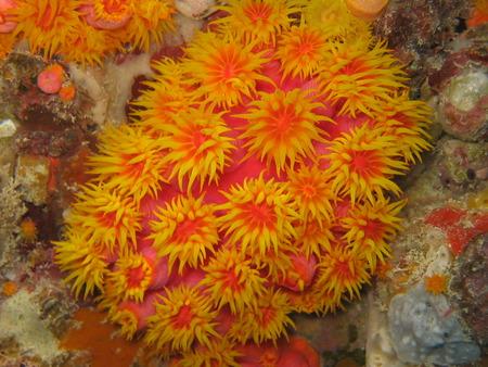 Hardy Reef Plant - coral reef plant, ocean