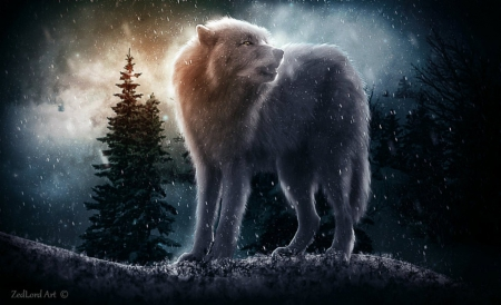 Wolf and Winter - fantasy, wolf, winter, animal