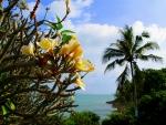 Island Koh Samui - Thailand