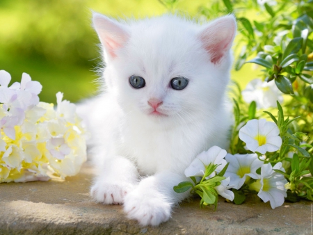 White Kitty In Spring Garden