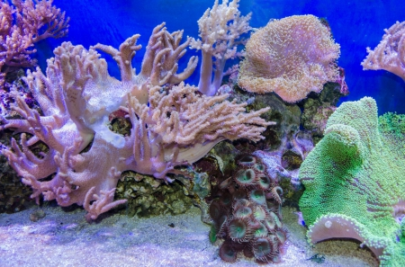 Tropical Sea Underwater Corals - Sea, Nature, Underwater, Oceans, Tropical, Coral Reefs