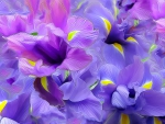 Abstract of Spring Flowers