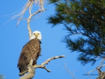 Eagle Eyeing Me