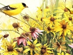 Goldfinch in Golden Garden