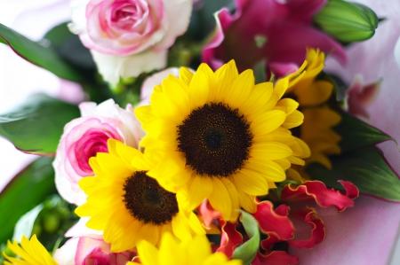 Beautiful Sunflowers Roses Flowers Nature Background