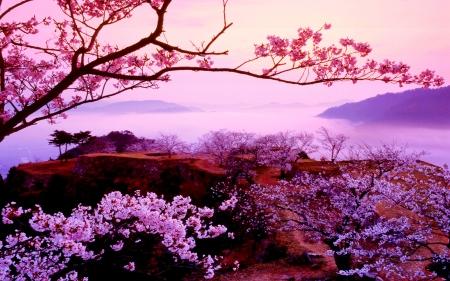 SAKURA TREE  sakura, cherry, lake, tree, mountains, branch, nature