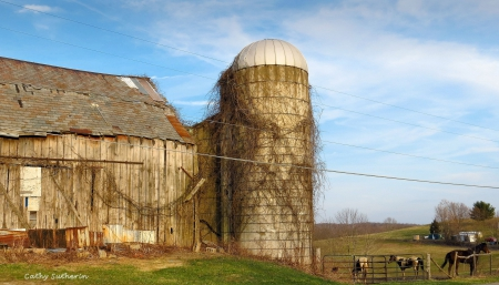 Evening on the Barn - architecture, silo, spring, horse, old, horses, animal, barn, farm, twigs, nature, field