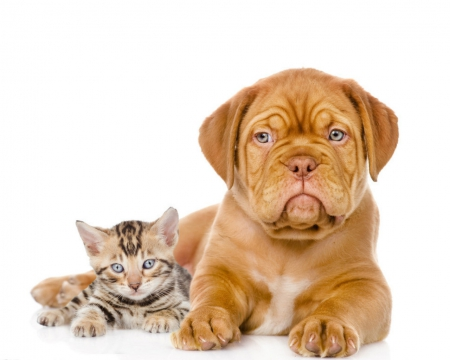 Cute Dog And Cat Dogs Animals Background Wallpapers On Desktop Nexus Image 1724815