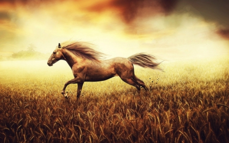 Horse - horse, animals, wild, field