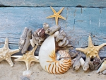 ♥Starfishes & Shells♥