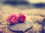 Love rose.