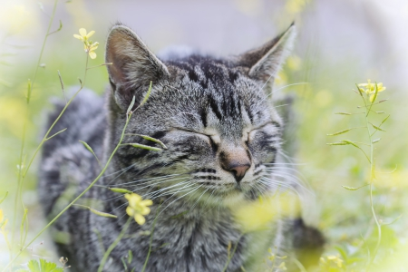 Taking A Nap ♥ - grass, kitty, beautiful, nap, cat, sweet, cute, photography, flowers