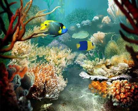 Tropical Fish - art, coral reef, ocean floor, tropical fish