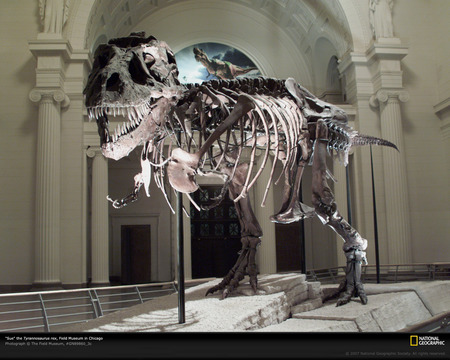 Tyrannosaurus rex - fossil, national geographic, picture, animal, t-rex, photography, paleontology, nice, tyrannosaurus rex, prehistory, reptiles, reptile, other, animals, amazing, cretaceous, dinosaurs, cool, tyrannosaurus, prehistoric, awesome, great, skull, dinosaur, tyrannosaur
