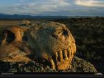 Dinogorgon skull